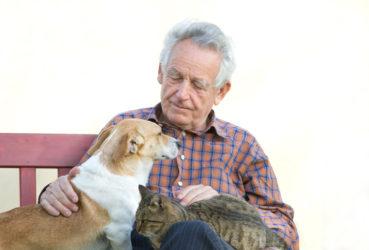Beneficios de la terapia con animales para las personas mayores